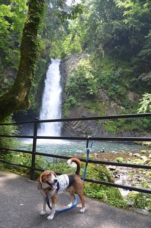 20140702浄蓮の滝05