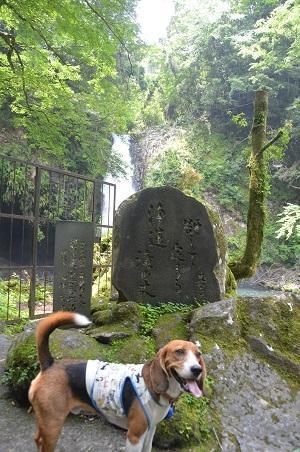 20140702浄蓮の滝04