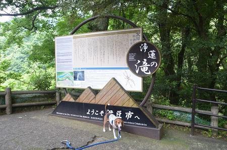20140702浄蓮の滝03