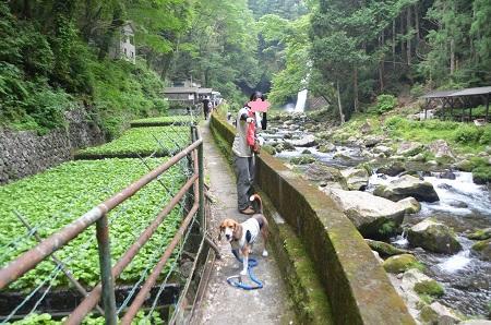 20140702浄蓮の滝14