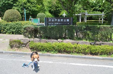 20140712沢谷戸自然公園01