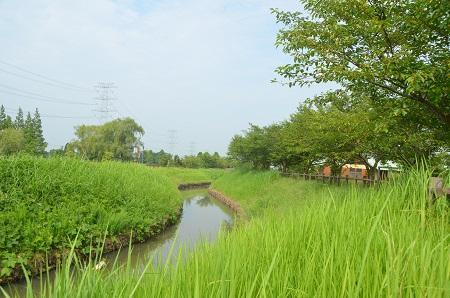 0140724 かわち水と緑のふれあい公園04