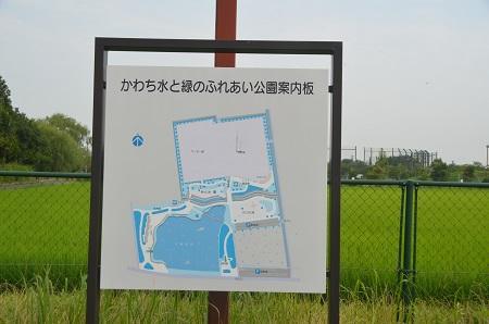 20140724 かわち水と緑のふれあい公園01
