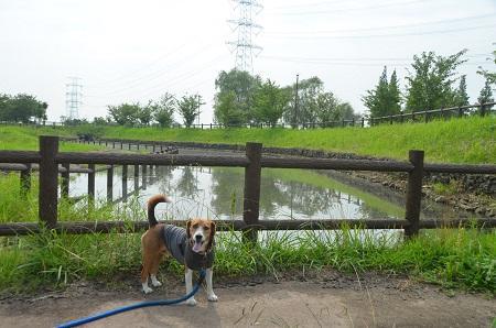 0140724 かわち水と緑のふれあい公園09
