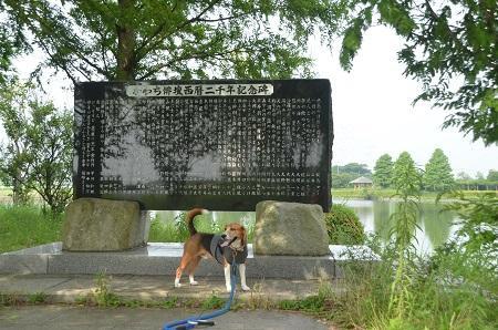 0140724 かわち水と緑のふれあい公園17