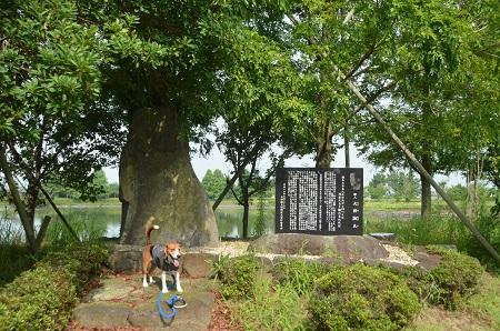 0140724 かわち水と緑のふれあい公園15