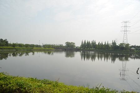 0140724 かわち水と緑のふれあい公園13