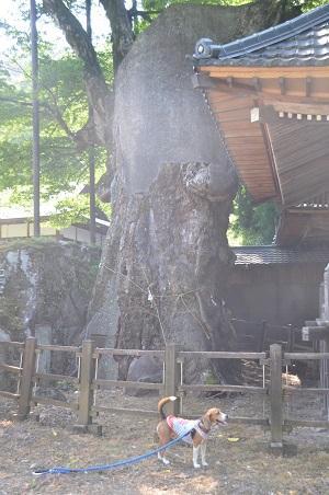20140730 根古屋神社04