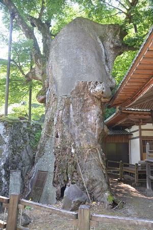 20140730 根古屋神社03
