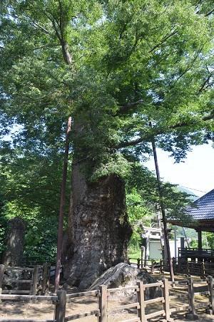 20140730 根古屋神社12