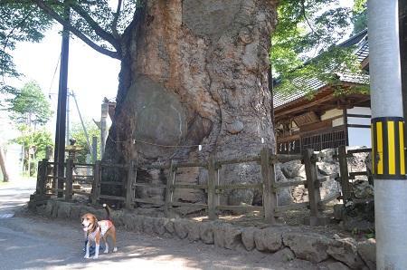 20140730 根古屋神社09