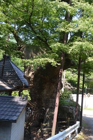 20140730 根古屋神社18