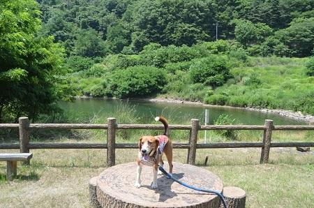 20140730 みずかき湖10
