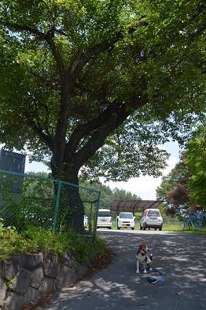 20140731 旧・小泉学校14