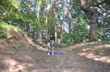20140731 笹尾砦05