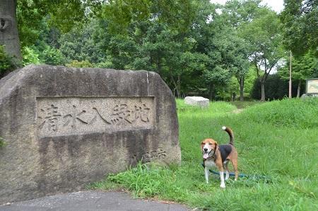 20140817清水入緑地16