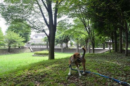 20140817清水入緑地20