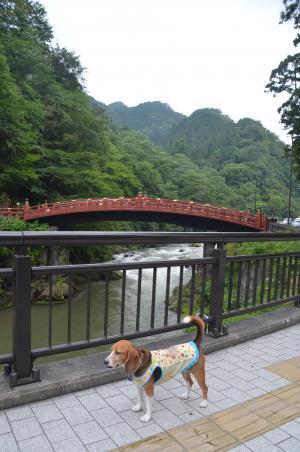 20140823二荒山神橋08