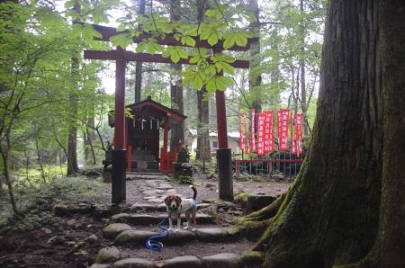20140823滝尾神社24