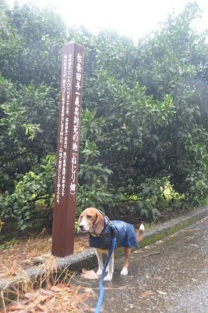 20140925石橋山合戦場18