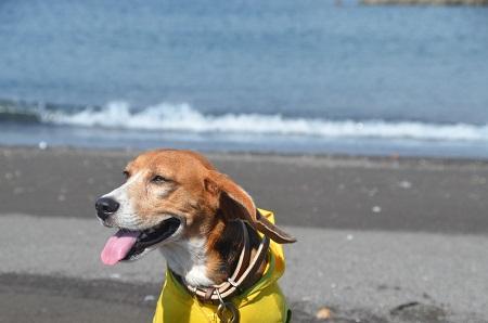 20140925オレンジビーチ21