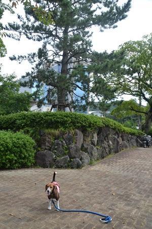 20140926伊東氏居館跡11
