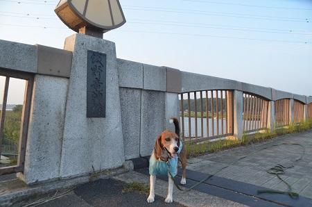 20140930佐倉ふるさと広場25