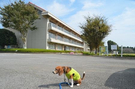 20141014旧・久我小学校跡16