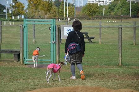 20141016北総ドッグラン34