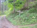 石尾根への登山道