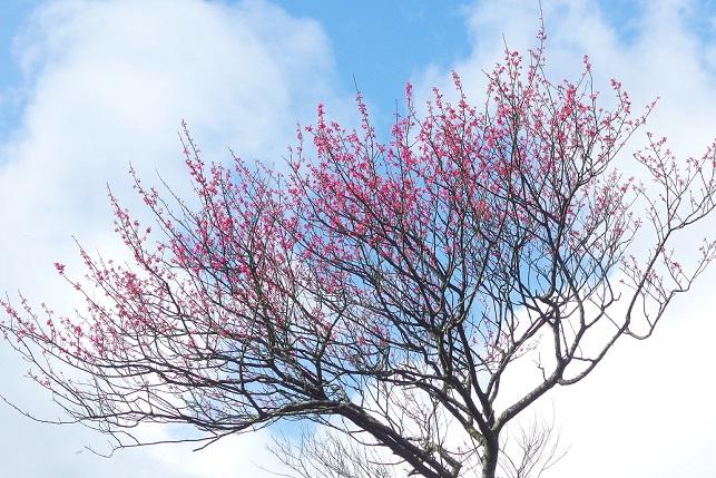 早春の色(1)
