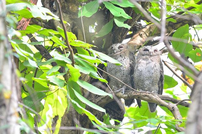 野鳥(1)