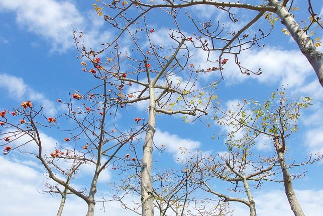 木綿の木が咲くこと(2)