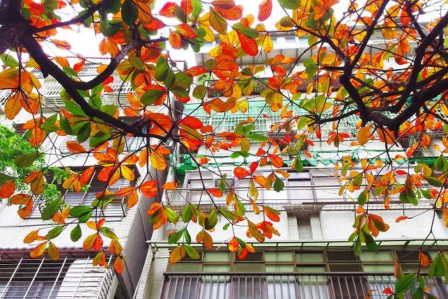 春の紅葉 (2)