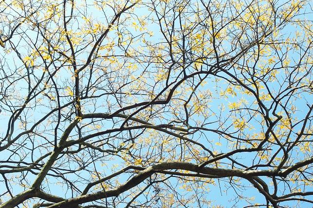 新緑の季節(2)