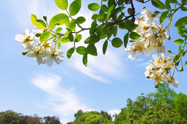 新緑の季節(1)