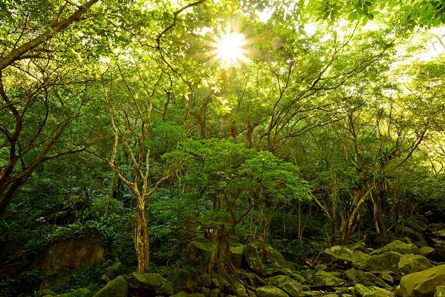 苔むす森(4)