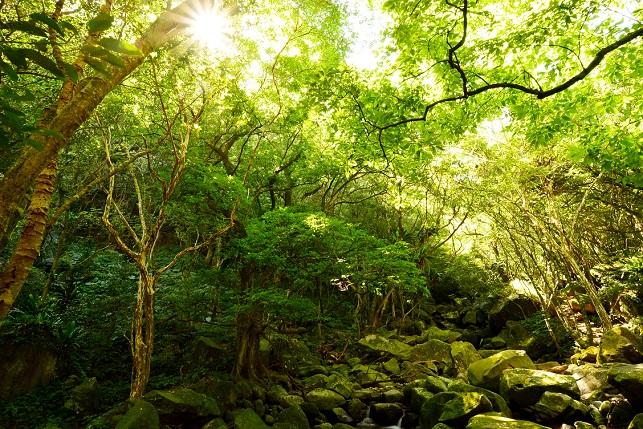 苔むす森(3)