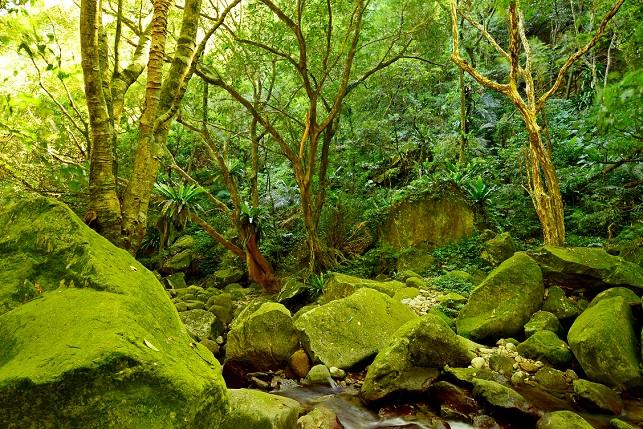 苔むす森(2)