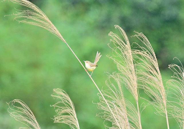 野鳥(6)