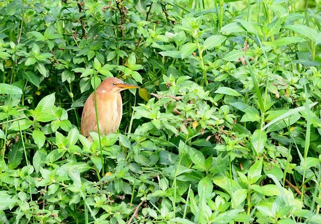 野鳥(5)