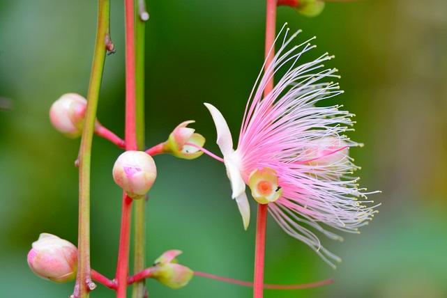 南国の花々(4)
