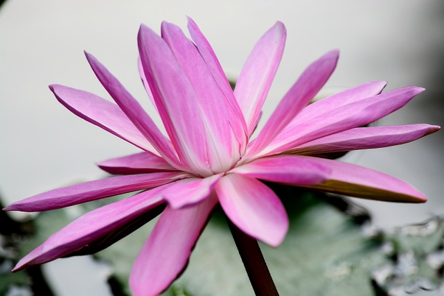南国の花々(2)