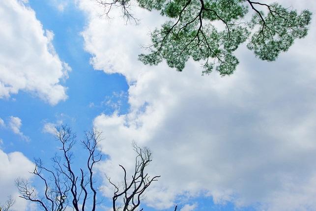 仰ぎ見た夏空(2)