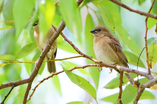 梢の鳥(1)