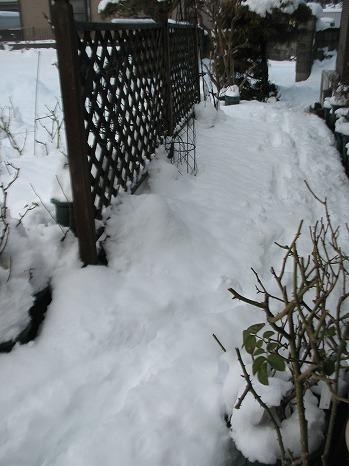 雪 (7)