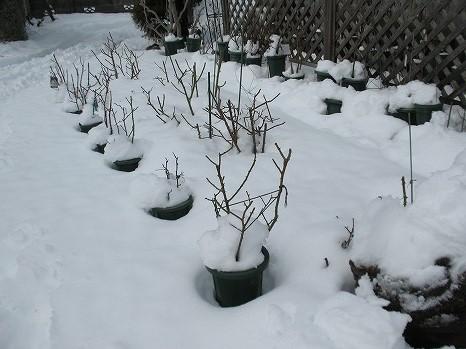 雪 (9)