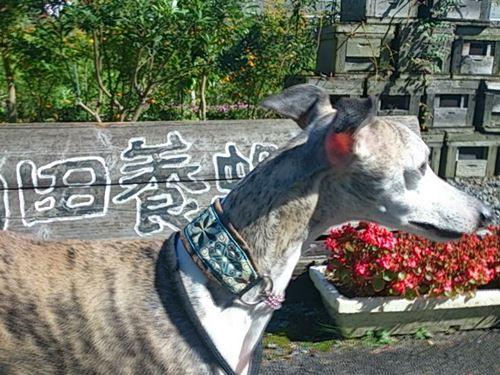 奥津湖家族会外伝 (2)