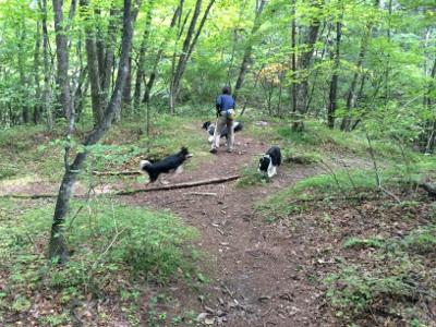 岳家とキノコ狩り