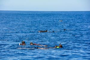 Dolphin+Excursions-232_convert_20141003191602.jpg